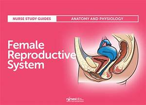Female Reproductive System  Anatomy And Physiology In 2020