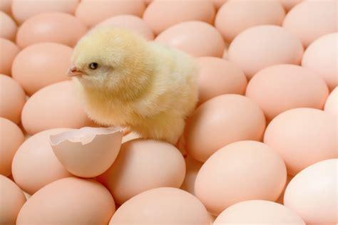 LIAA izziņo pavasara uzņemšanu 14 biznesa inkubatoros