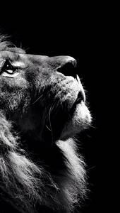 Gros C La Puissance : fond d 39 cran iphone c wallpaper 1 transfert pinterest felin lion et animaux ~ Medecine-chirurgie-esthetiques.com Avis de Voitures