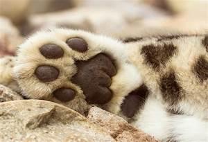 Baby One Karlsruhe : pretty cat paws snow leopard paw ~ A.2002-acura-tl-radio.info Haus und Dekorationen