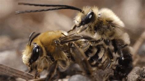 feel unclean watching  video  bee sex