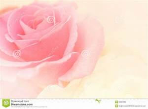 Light Pink Roses In Soft Color And Blur Style Stock Image ...