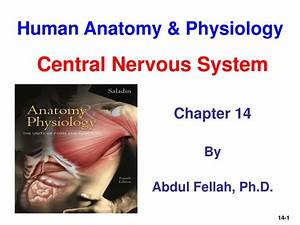 Fun Practice And Test  Human Anatomy And Physiology Ppt