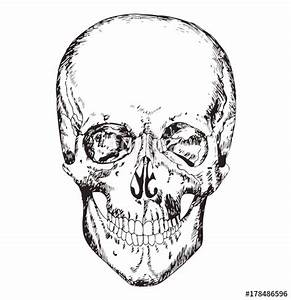 Medical Body Drawing