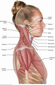To Perform Orthopedic Manual Therapy To The Neck That Is