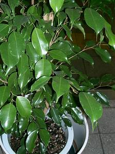 Plante Verte D Appartement : plante d 39 appartement ~ Premium-room.com Idées de Décoration
