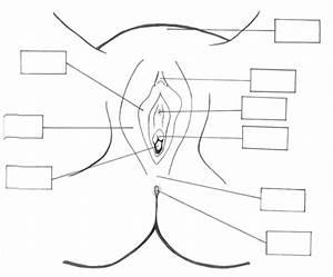 Anatomy Diagrams