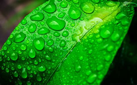 All of them are high quality with a high definition resolution of 1080p, that is, 1920 x1080. Green Life - Phone wallpapers