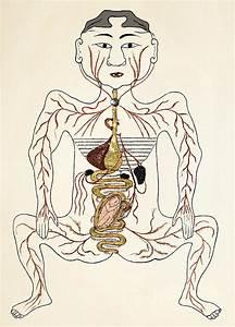 Pregnancy Anatomy  15th Century Artwork Photograph By