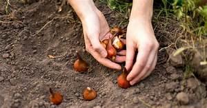 Tulpenzwiebeln Im Frühjahr Pflanzen : tulpenzwiebeln richtig pflanzen mein sch ner garten ~ A.2002-acura-tl-radio.info Haus und Dekorationen