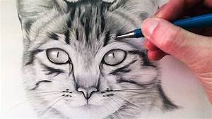 How, To, Draw, A, Cat
