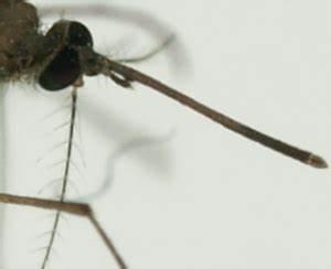 Was Machen Wespen Im Winter : stechen und bei en diese tiere nerven im sommer ~ Lizthompson.info Haus und Dekorationen