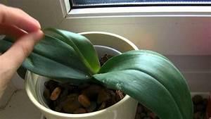 Orchideen Umtopfen Video : orchideen richtig umtopfen schneiden bonus video ~ Watch28wear.com Haus und Dekorationen