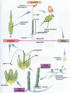 Life Cycle Of A Venus Fly Trap Diagram