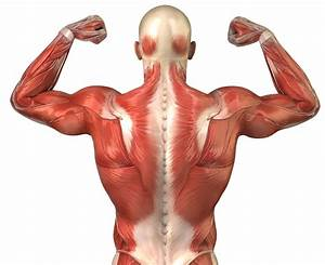 Discover How To Gain Muscle Mass Fast
