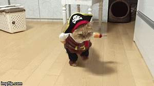 Animated Chart Maker Aaargh Walk The Plank Imgflip