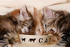 Futter Für Wildvögel Selber Machen : katzenfutter selber machen mit rezeptvorschlag ~ Michelbontemps.com Haus und Dekorationen