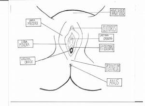 Male Reproductive System Diagram Worksheet Answers