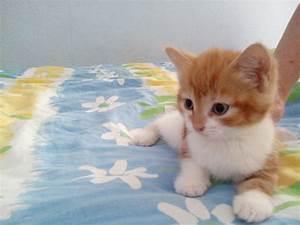 Je Donne Tout Gratuit : donne a donner 3 chaton gratuit 1170 bruxelles watermael boitsfort don chats et chatons ~ Gottalentnigeria.com Avis de Voitures