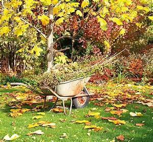 Garten Im Herbst : herbst im garten hornbach ~ Watch28wear.com Haus und Dekorationen