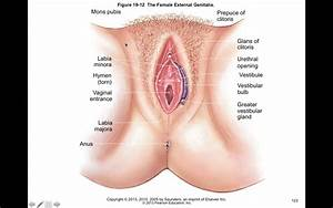 Chapter 32 Female Genital And Reproductive Function
