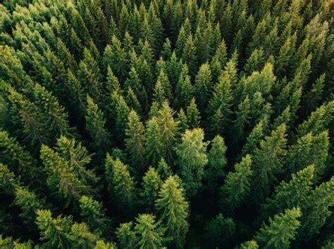 ES jaunā Meža stratēģija skatās uz mežu atrauti no pārējās ...