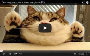 Funny Cat Compi... Funny Cat Videos