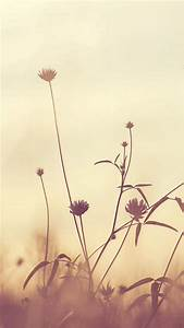 Flower, Nature, Fall, Romantic, Cold, Iphone, 8, Wallpapers, Free