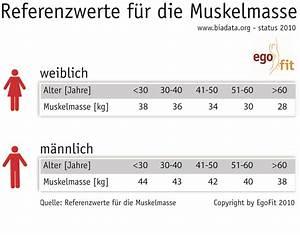 Muskelmasse Berechnen Tabelle : lifepr ~ Themetempest.com Abrechnung
