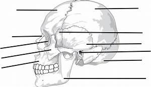 Label The Bones Of The Skull Clip Art At Clker Com