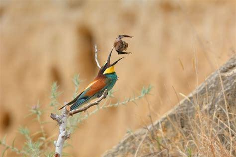 Iespaidīgs tuvplāns: kā izsalcis putns cenšas apēst ...
