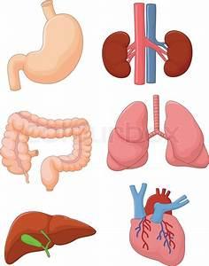 Vector Illustration Of Cartoon Internal Organ Set