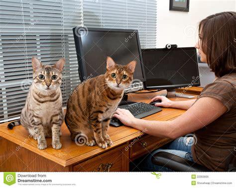 femme au bureau femme et chats au bureau d 39 ordinateur image stock image