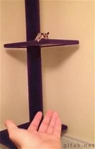 Sugar Glider Jump GIFs - Find & Share on GIPHY