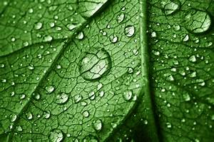 Beautiful, Leaf, With, Drops, Stock, Photo, -, Download, Image, Now
