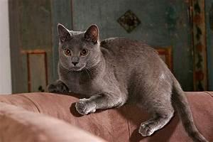 Welche Katzenrasse Passt Zu Mir : welche katze passt zu mir machen sie den test ~ Lizthompson.info Haus und Dekorationen