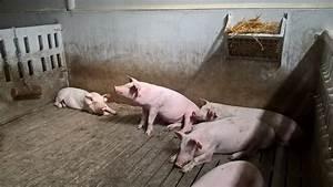 Spain Updates Regulations For Pig Farm Management