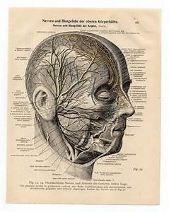 1933 Medical Vintage Illustration Print Skull Skeleton