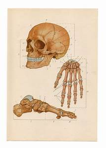 49 Best Images About Skeleton Illustrations On Pinterest