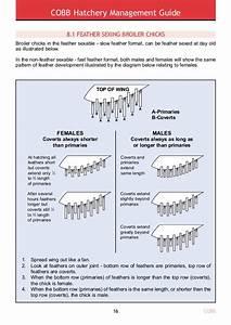 Hatchery Management Guide English Ab158662cc0dbea86b974859