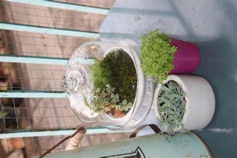 สวนจิ๋วในโหลแก้ว Terrariums