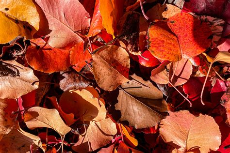 Leaves of Autumn | Fallen autumn leaves spotted in ...