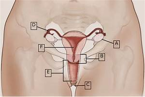 How Well Do You Know Your Female Anatomy