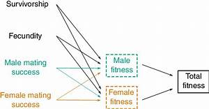 The Two Routes To Fitness In Hermaphrodites  In