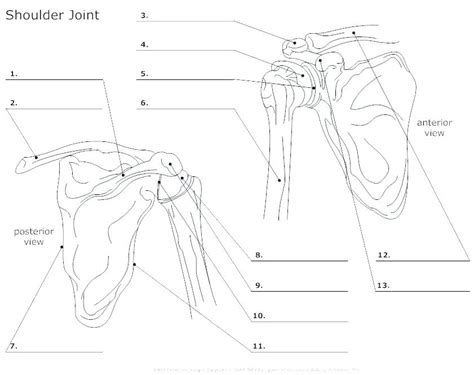 There is a printable worksheet available for download here so you can take the quiz with pen and paper. Human Muscles Diagram Unlabeled - Human Body Diagram Black And White Human Anatomy : At moment i ...