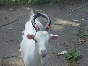 754 Best Goat Playground Images On Pinterest
