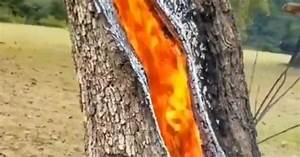 Tree, Burning, Inside, Another, Anomaly, Of, Nature, Tree, Struck, By, Lightning, Burns, From, The, Inside
