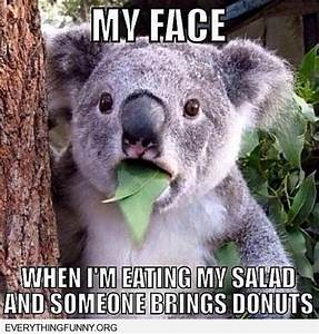 1000+ images about memes on Pinterest | Funny koala, Funny ...