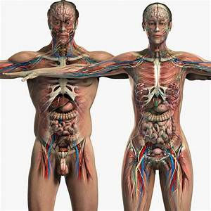 23 Best Images About Female Anatomy On Pinterest
