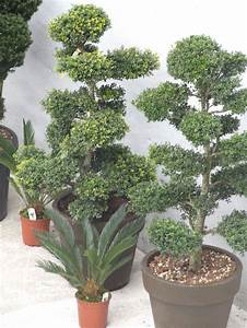 Mediterrane Pflanzen Liste : pin von der palmenstadl auf mediterrane pflanzen ~ Watch28wear.com Haus und Dekorationen